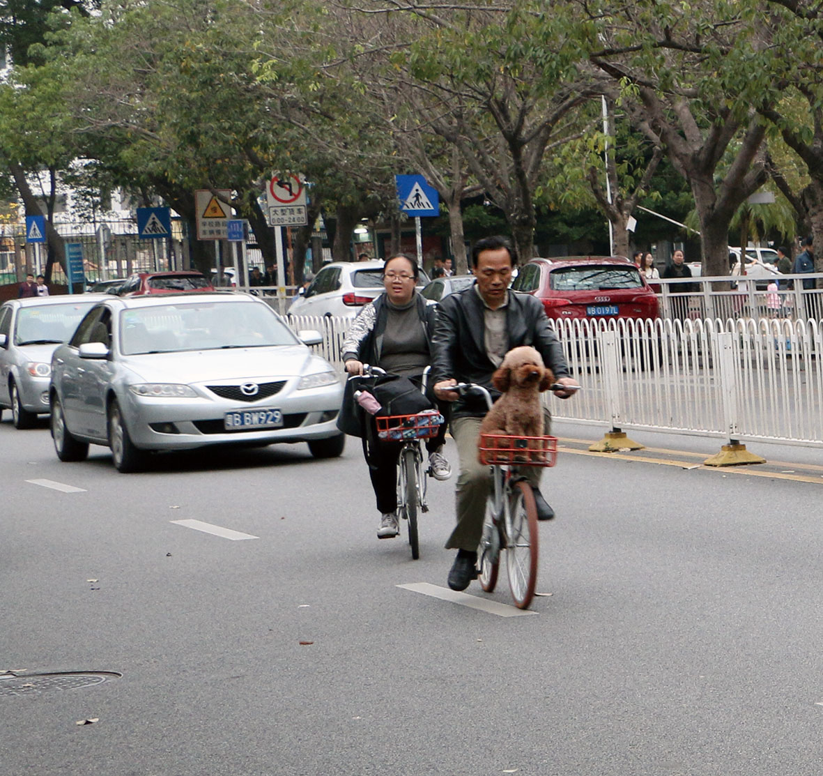 http://ubeat.com.cuhk.edu.hk/wp-content/uploads/2017/130_bicycle_dog.jpg